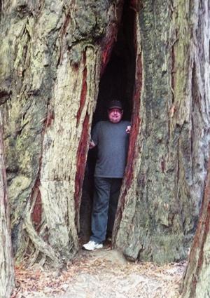 Randy in the redwoods
