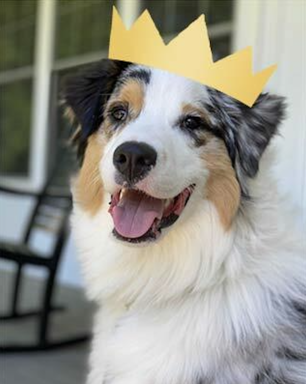 Photo of Bandit with crown.