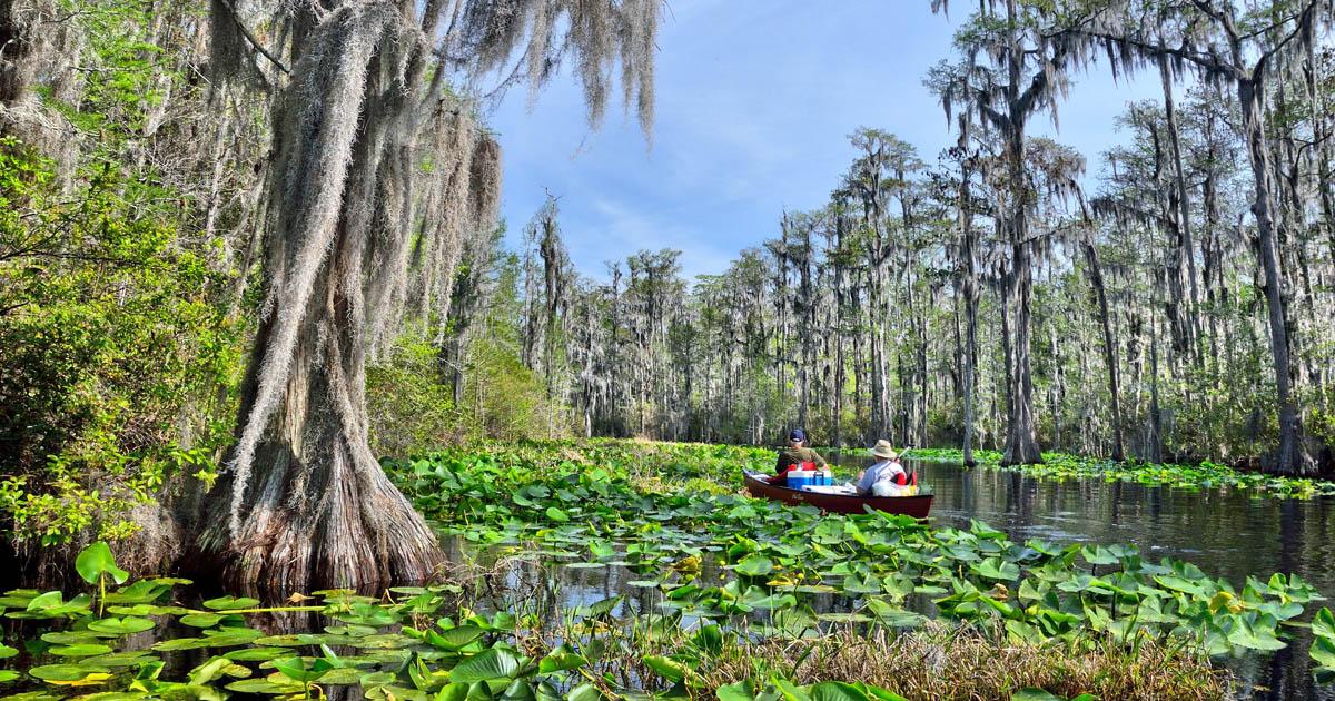 Boat in Okefenokee Swamp