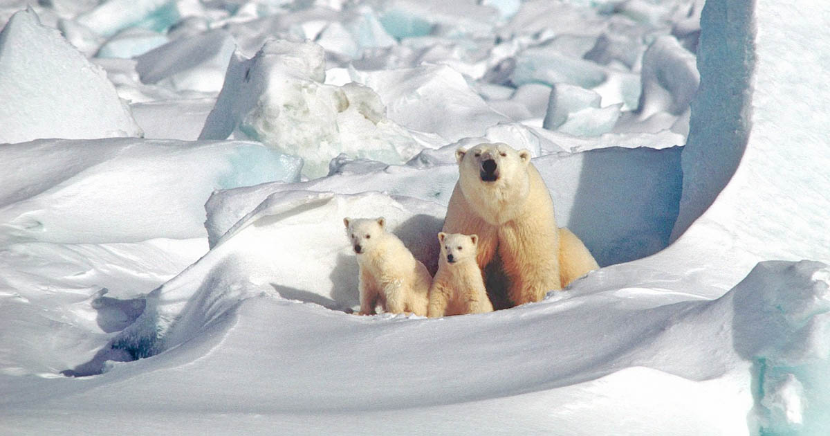Take Action: Arctic Refuge Threatened by Seismic Testing
