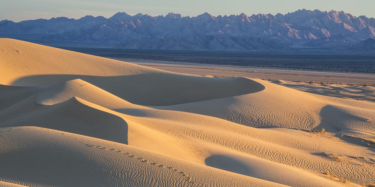 Cadiz Dunes Wilderness