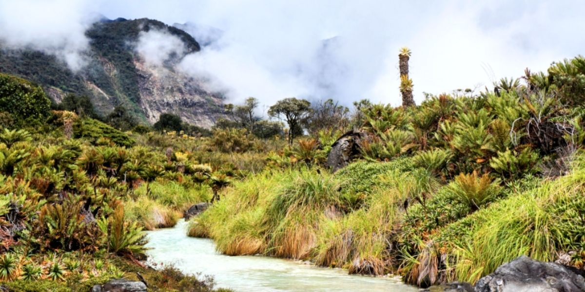 High Andean páramo ecosystem within Purace National Park, Colómbia