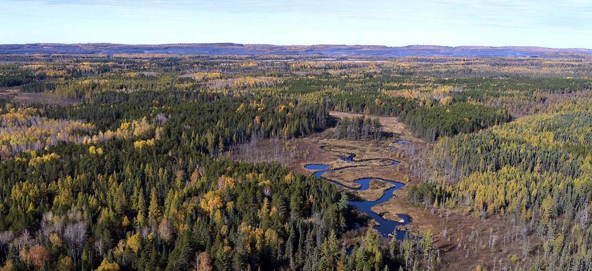 Superior National Forest near proposed mine site