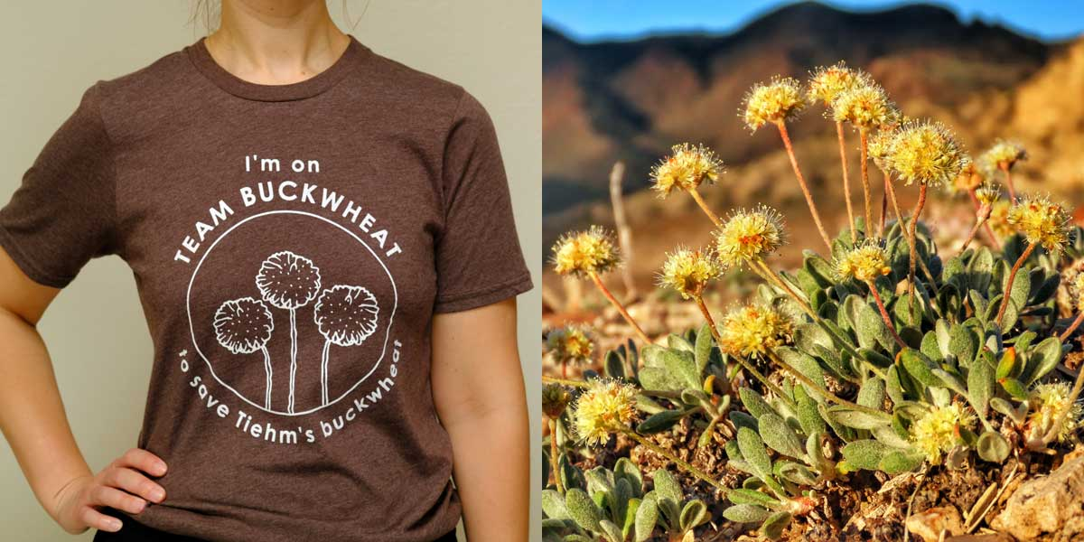 Team Buckwheat T-shirt, Tiehm's buckwheat plant
