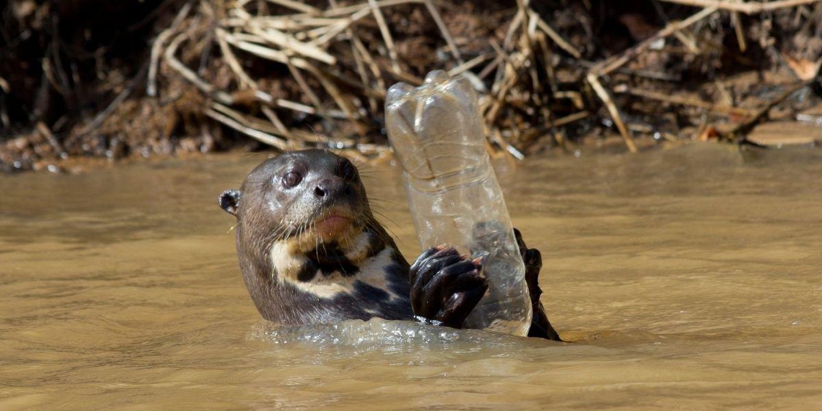 Otter holding plastic bottle
