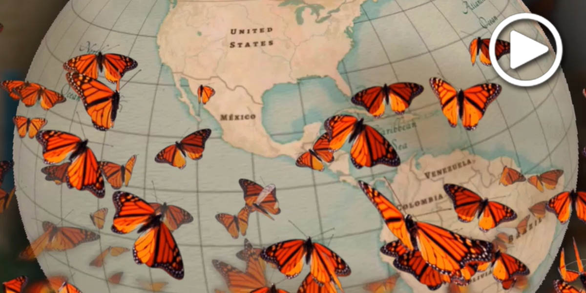 Monarch butterfly graphic