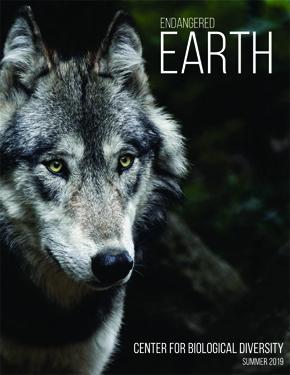 Summer 2019 newsletter cover, wolf