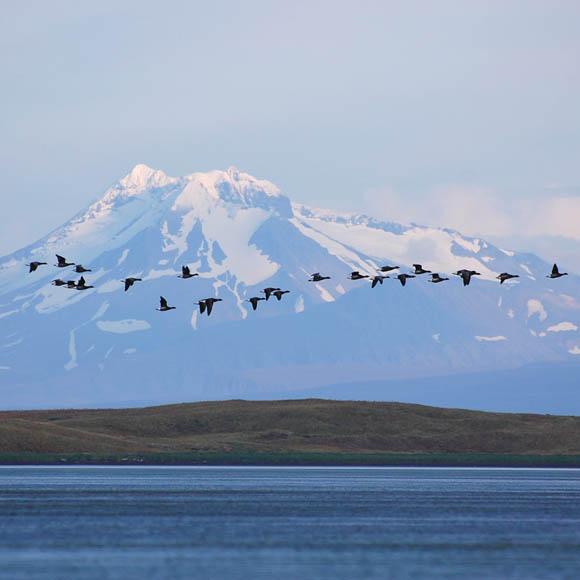 Izembek National Wildlife Refuge