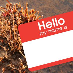 """Lebbiea grandiflora and """"Hello"""" sticker"""