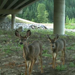 Deer under underpass