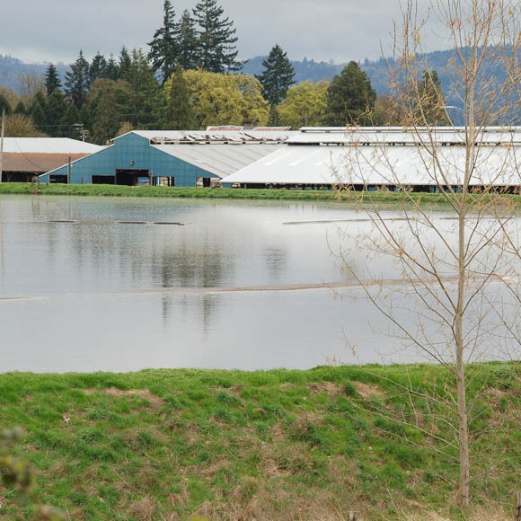 Factory farm waste lagoon