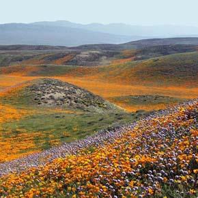 Grasslands near proposed Centennial site