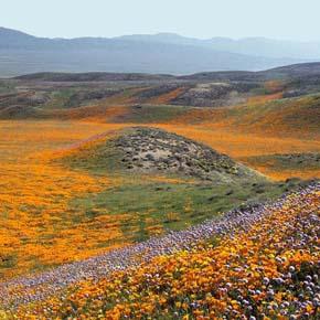 Grasslands near proposed site of Centennial development