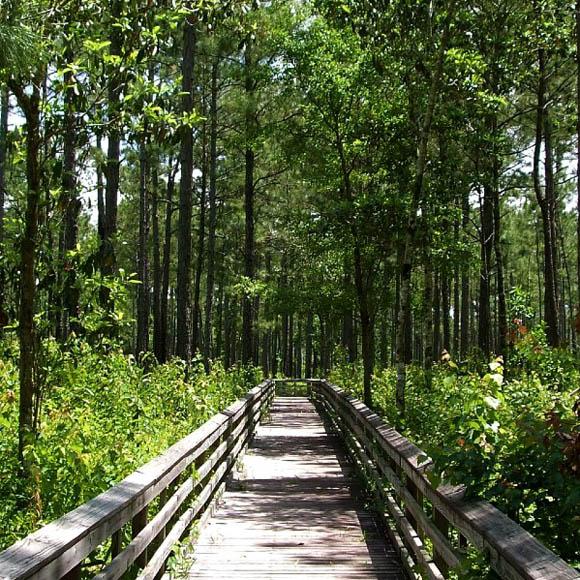 Weeks Bay pitcher-plant bog, Alabama
