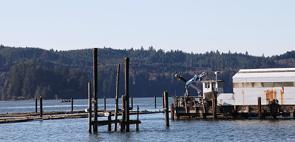 Oyster farm, Oregon