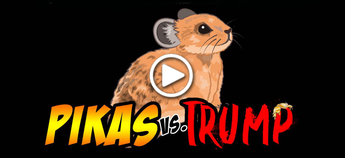 Pikas vs. Trump