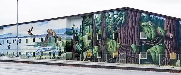 Marbled murrelet mural