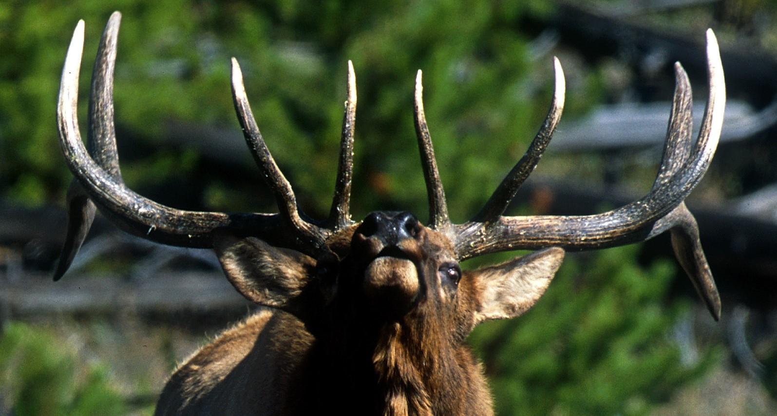 Idaho Wildlife Federation