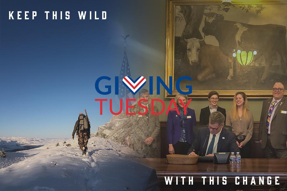 Wyoming Wildllife
