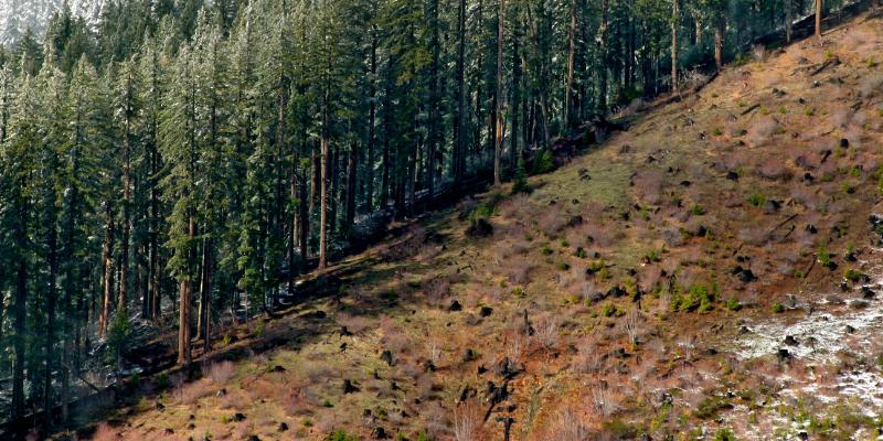 Oregon Wild