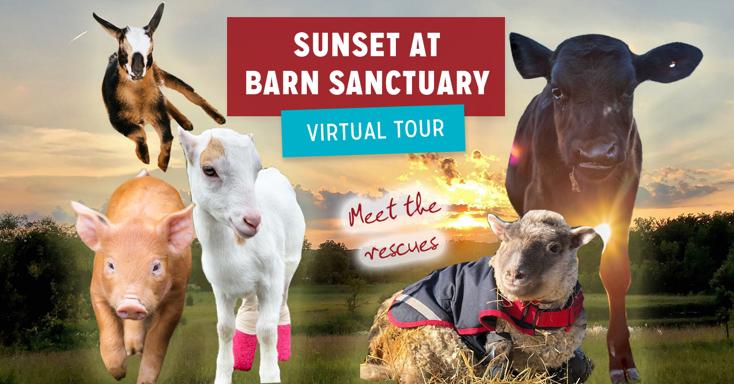 More ways to visit Barn Sanctuary