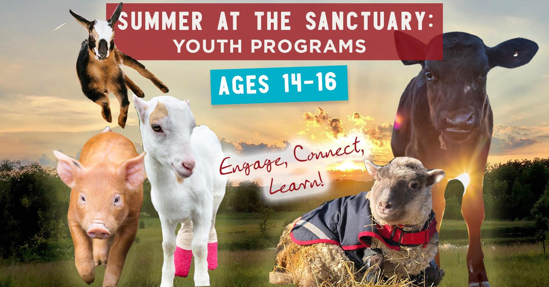 More ways to visit Barn Sanctuary