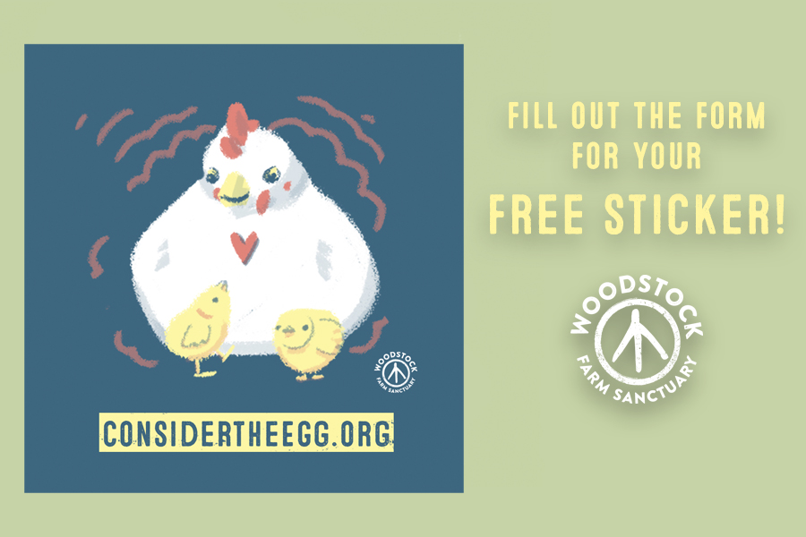 FREE Considering the Egg Stick...