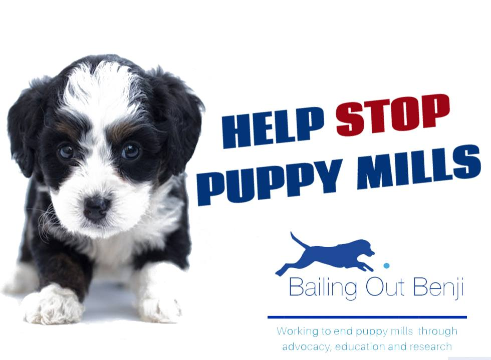 Ban Puppy Mill Sales in Massachusetts