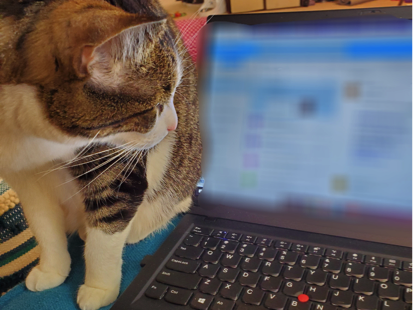A cat stands next to Sian's laptop looking at the screen.