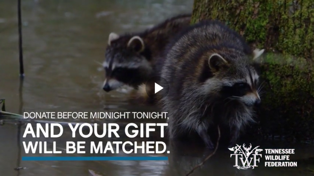 VIDEO: Donate before midnight tonight, and your gift will be matched.