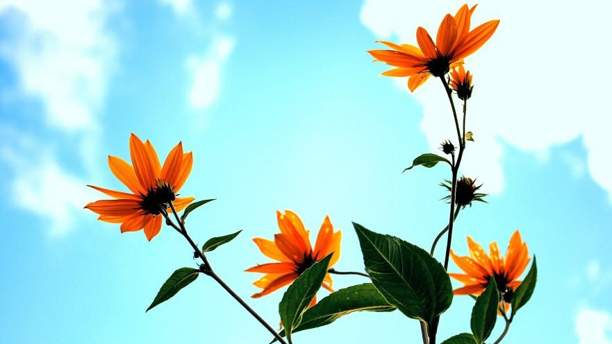 fresh grown wildflowers under a blue sky