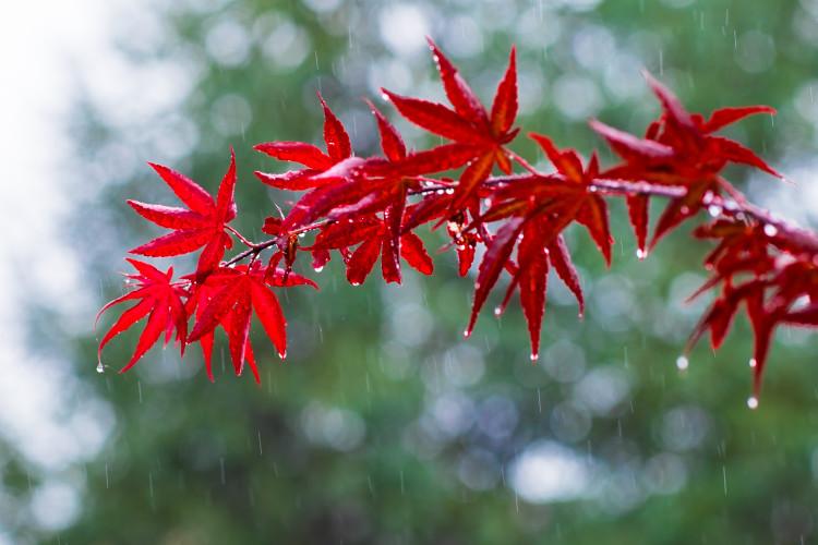 rain on a tree