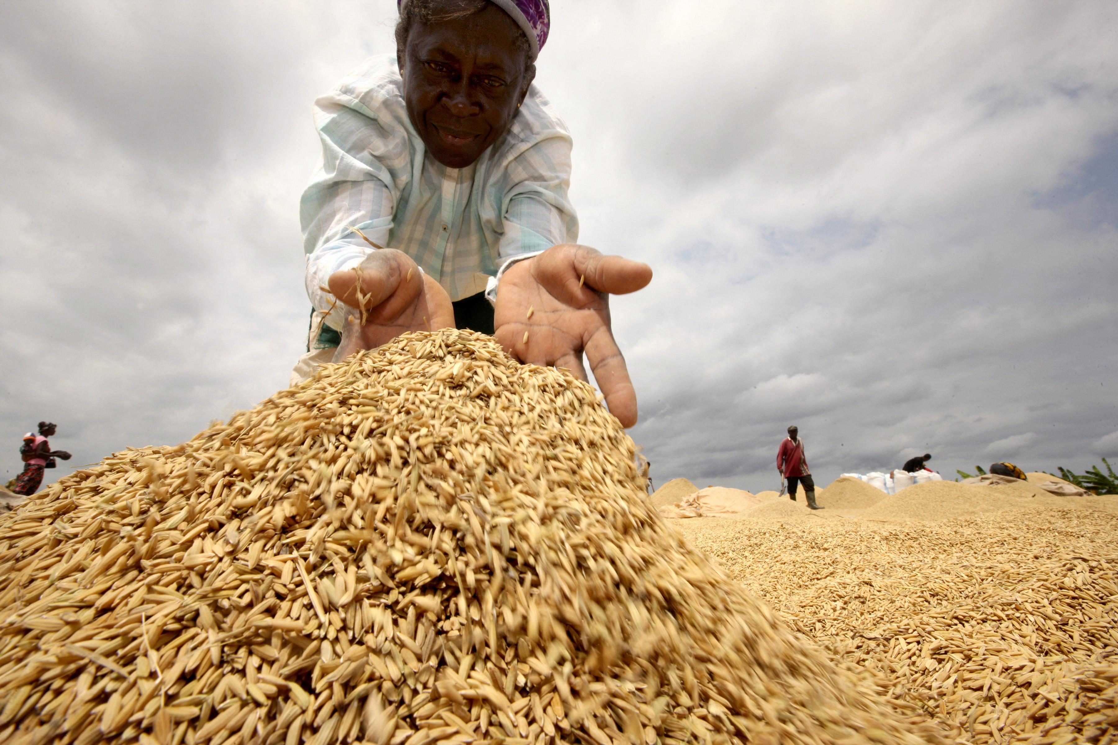 African woman pouring what appear to be grains of wheat
