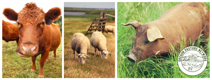 Learn more about the Oregon Pasture Network