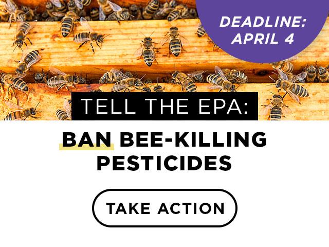 Tell the EPA to ban neonics