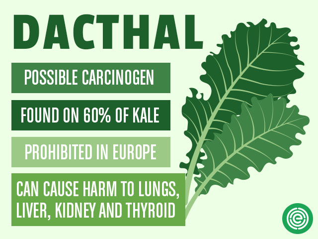 Dachtal found on 60% of kale