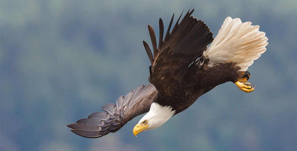 Audubon Action Alert: Help SAVE America's Birds Other Wildlife!