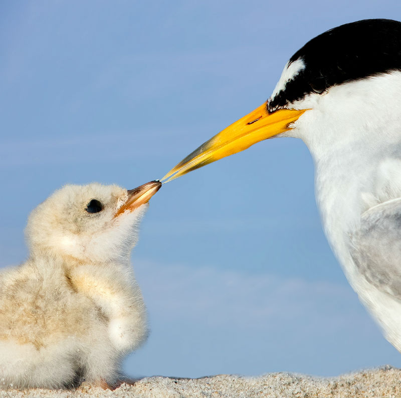 Add Your Name: Restore the Gulf of Mexico for Birds and People