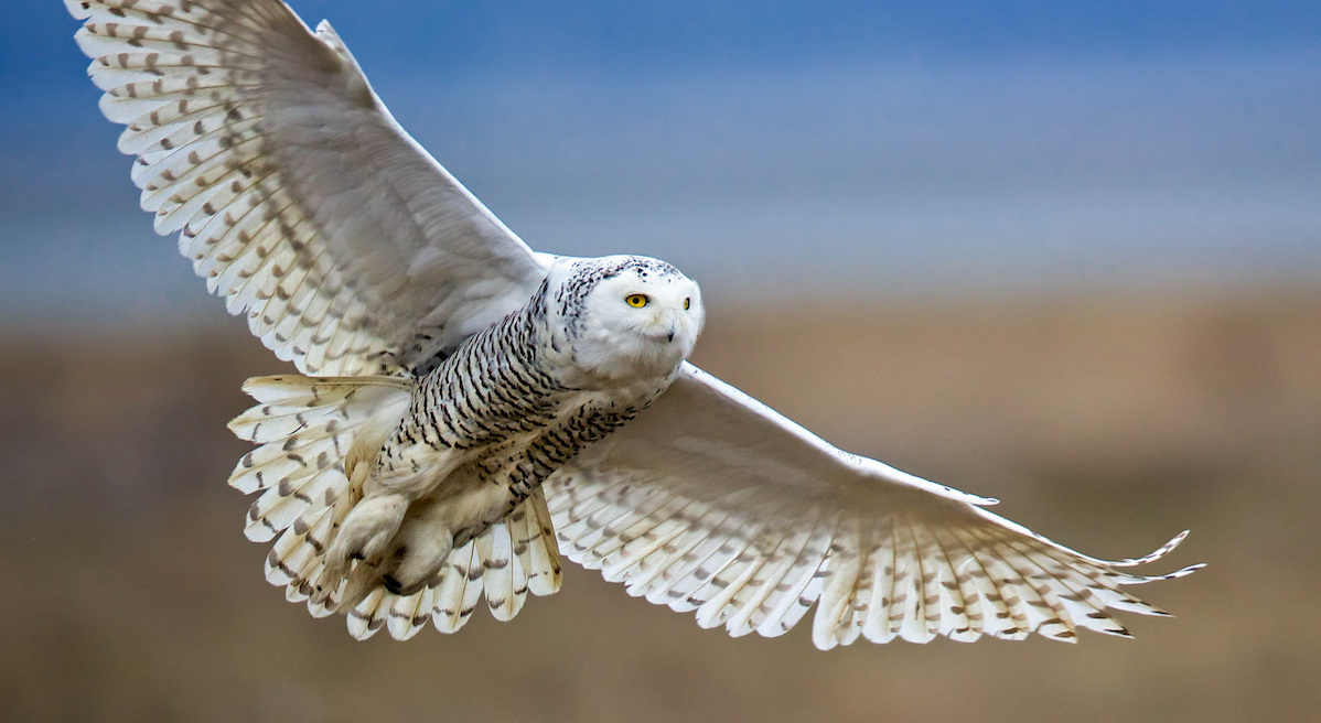 Audubon Action Alert: Restore Protections to the Arctic National Wildlife Refuge