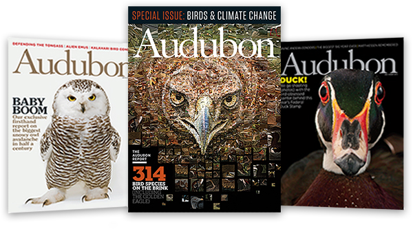 award-winning Audubon magazine
