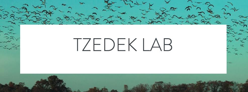 Tzedek Lab